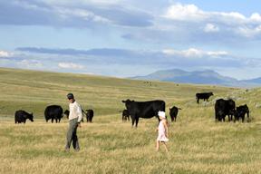 Reichelt Cattle